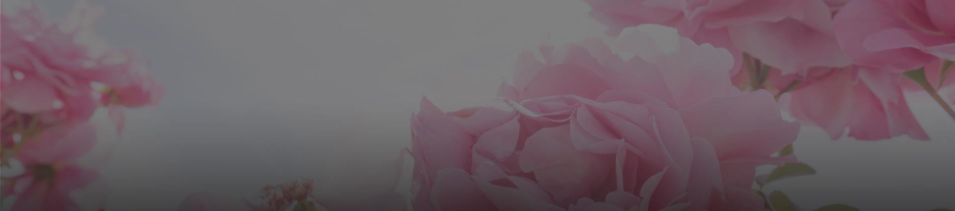 Kwiaty róży
