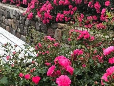 róże i inne kwiaty0