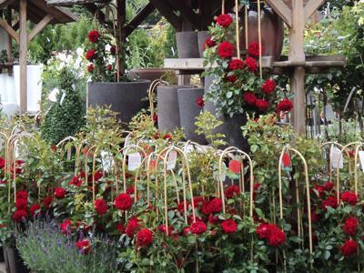 róże i inne kwiaty11