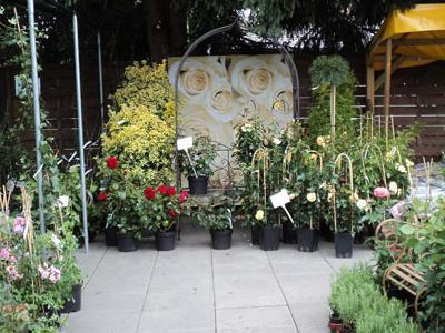 róże i inne kwiaty14