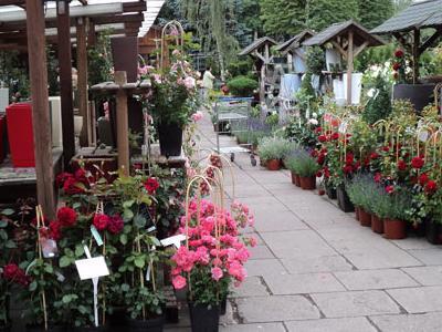 róże i inne kwiaty15