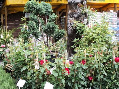 róże i inne kwiaty19