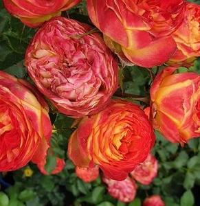 róże i inne kwiaty4